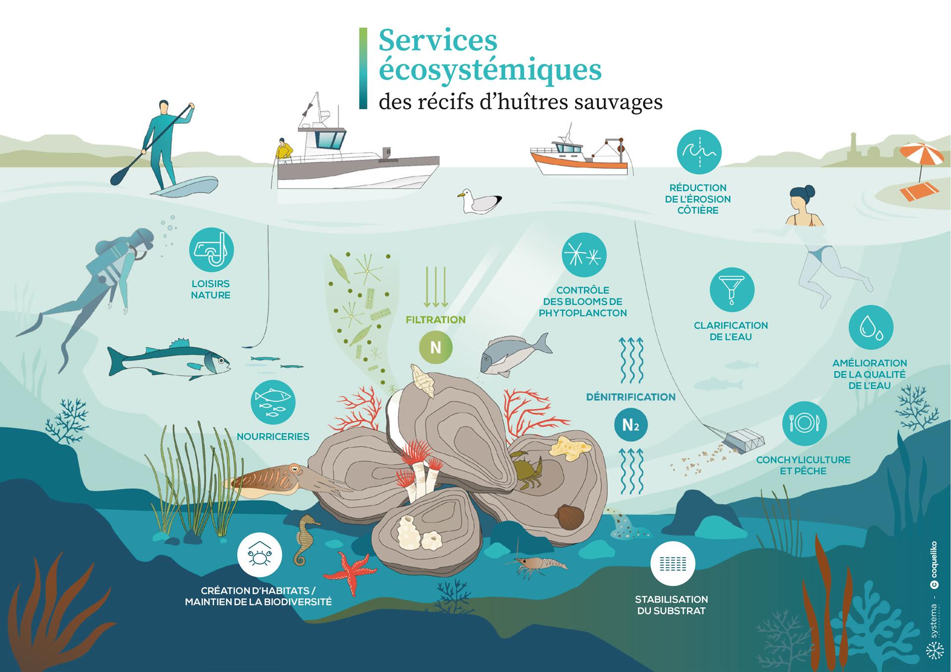Illustration-nature-services-ecosystemique-bretagne-Agence-Coqueliko-Lannion